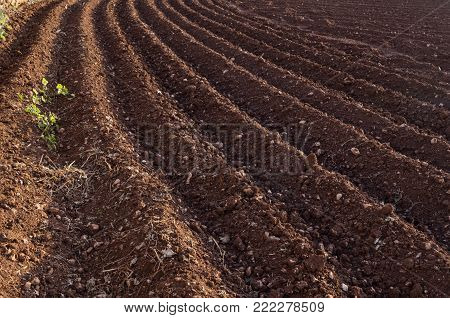 View of the plowed land. Furrows from the plow. Agriculture Preparing for potato planting