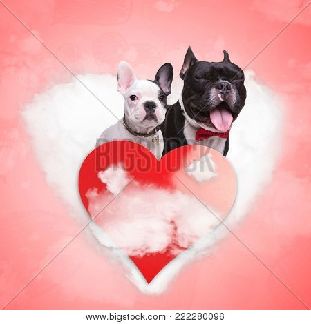 couple of french bulldogs puppies being in love on a heart shaped cloud with red heart in front of them