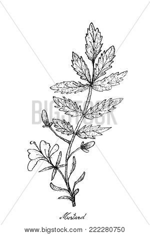 Vegetable Salad, Illustration of Hand Drawn Sketch Delicious Fresh Green Mustard Plant Isolated on White Background.