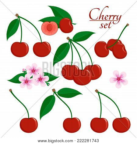 Ripe cherry with green leaves, cut cherry, sakura flower in flat style. Set of icons. Design for a label, poster, banner. Vector illustration.