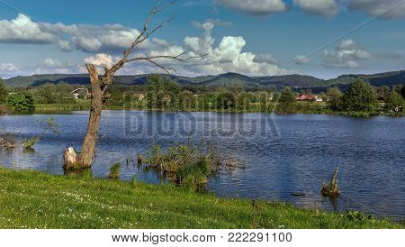 breathtaking scenery. Unusual and picturesque scene. Old dry tree in the forest lake in the middle of the mountains. rural. Beauty world
