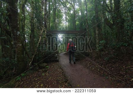 Hike along Toolona Creek Circuit in Lamington National Park, Gold Coast, QLD, Australia