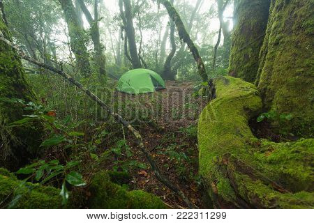 Camp in rainforest on Toolona Circuit, Lamington National Park, QLD, Australia