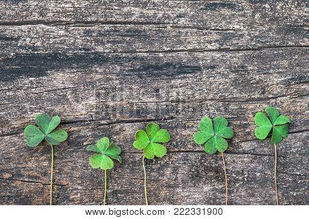 St Patrick day background with shamrock clover leaf, Irish festival symbol