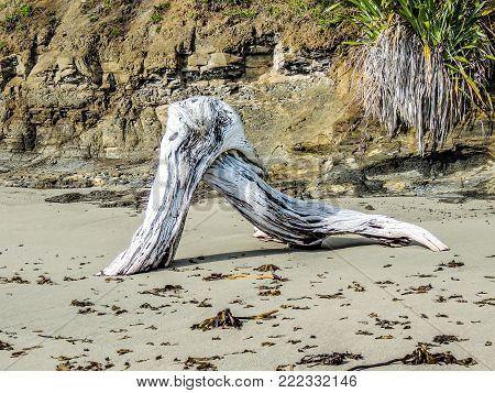 Driftwood on the beach, Goat Island, New Zealand