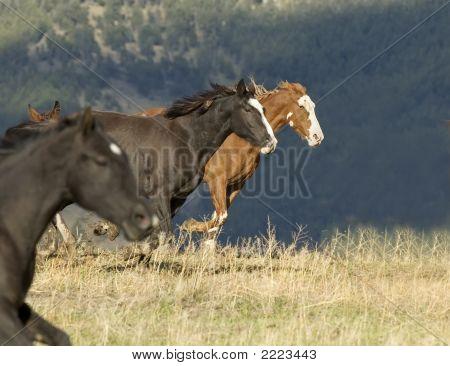 Horses In Stampede