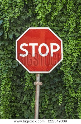 Stop sign on a background of green tree leaves.