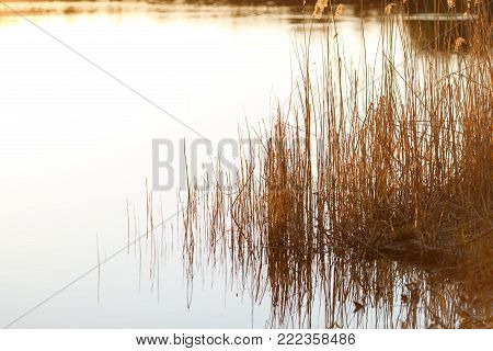 Reed vs. Sunset. Selective focus. Shallow depth of field. Beautiful sunset over the lake among the reeds reeds. Beautiful sunset on a lake with a reed in the foreground.