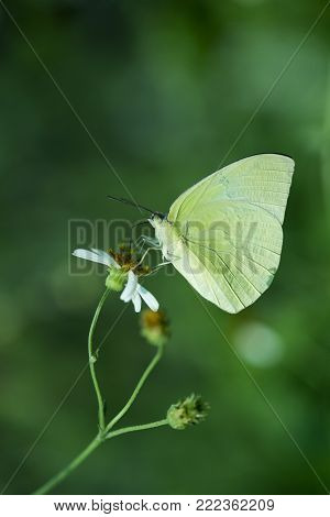 Close up of butterfly in the nature