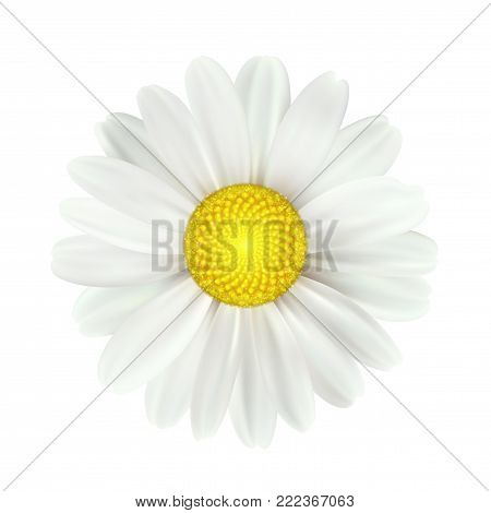Big set of beautiful colorful spring daisy flowers isolated on white background. Vector illustration EPS10