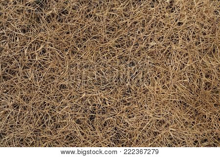 Close up of dry grass background, Summer in Asia