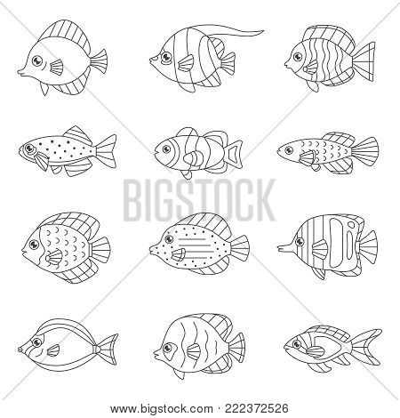 Fish outline vector icon set (tropical, marine, oceanic, freshwater).