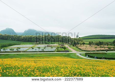 Yellow flower fields with mountain and fog