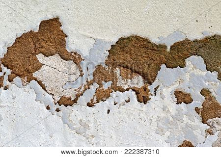 Green Mold Fungus And Peeling And Flaking Paint