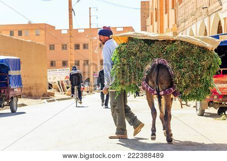 Errachidia, Morocco - February 27, 2016: A Man Leads A Donkey Laden With Greenery To A Marketplace T