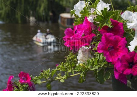 Bouquet of red and white flowers near the canal with catamaran in the summer day in Amsterdam