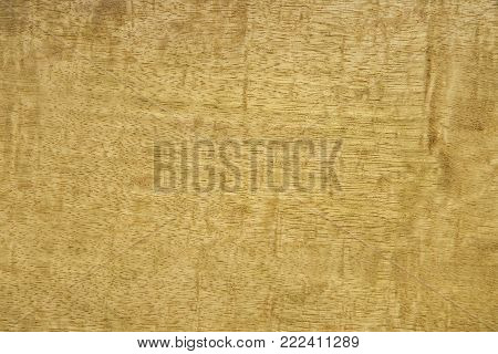 Veneer from Moving pamela tree. Background is yellowish brown. The texture is a smooth surface. Backdrop or background wooden.