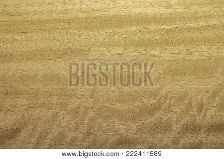 Veneer from moving Frisse tree. Background is yellowish brown. Wavy texture. Backdrop or background wooden.