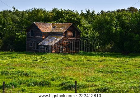 abandoned wooden house nestled in thick trees
