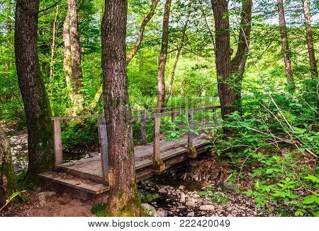wooden bridge over the forest brook. lovely countryside nature scenery in summertime