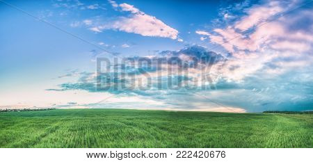 Countryside Rural Field Landscape Under Scenic Spring Blue Cloudy Dramatic Sky With White Fluffy Clouds. Skyline. Panoramic Agricultural Landscape Of Green Young Wheat. Panorama