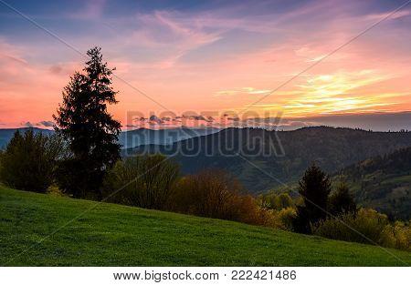 grassy slope rural area at sunset. beautiful mountainous landscape of Ukainian Carpathians in springtime