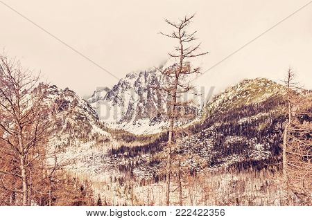 Spruce forest after natural disaster in High Tatras mountains, Slovak republic. Winter natural scene. Travel destination. Red photo filter.