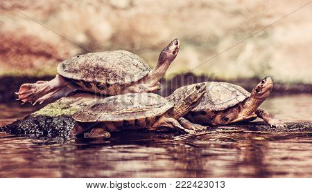 Turtles are heated on the stone. Humorous animal scene. Red photo filter.
