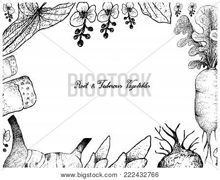 Root and Tuberous Vegetables, Illustration Frame of Hand Drawn Sketch of Galangal, Daikon, Broadleaf Arrowhead and Bamboo Shoot Plants Isolated on White Background.