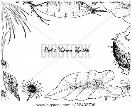 Root and Tuberous Vegetables, Illustration Frame of Hand Drawn Sketch of Fresh Yacon, Tigernut and Taro Plants Isolated on White Background.
