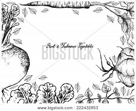 Root and Tuberous Vegetables, Illustration Frame of Hand Drawn Sketch of Fresh Turnip, Burdock and Ahipa Plants with Leaves Isolated on White Background