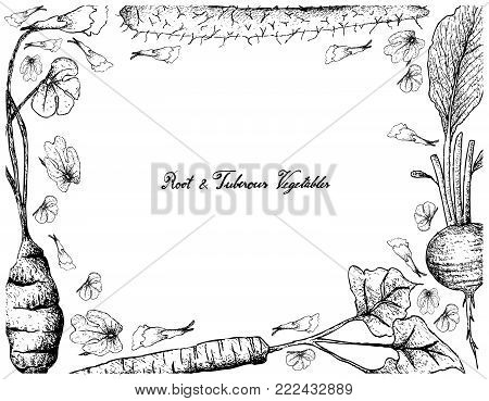 Root and Tuberous Vegetables, Illustration Hand Drawn Sketch of Fresh Chinese Yam, Burdock, Radish and Mashua Plants Isolated on White Background.