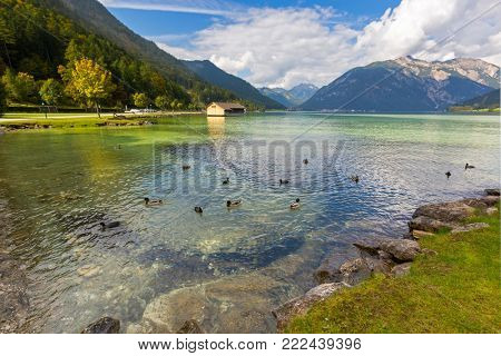 Mallards, Coots swimming in crystal clear lake water of Achensee lake in blue green shade of fresh Turquoise water, northern part of Achen Lake during Autumn in Tyrol, Austria, Europe