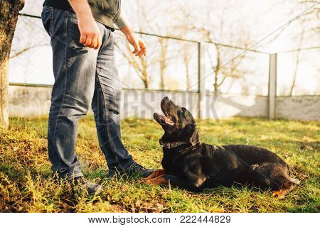 Male cynologist with service dog, training outside