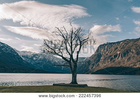 One tree. Solitude landscape. Tree alone at lakeside. Lake Bohinj, Slovenia poster