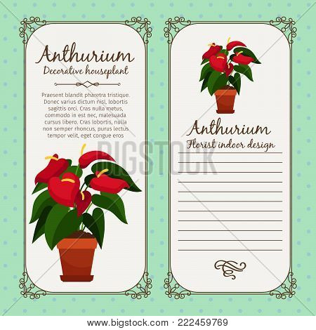 Vintage label template with decorative anthurium plant in pot, vector illustration