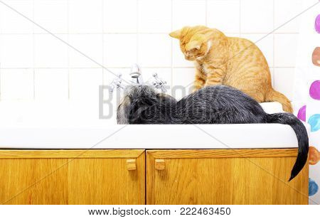 Animals pets at home dog puppy mutt and little red cat kitten playing together in bathroom sink