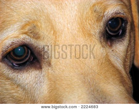Closeup Dog