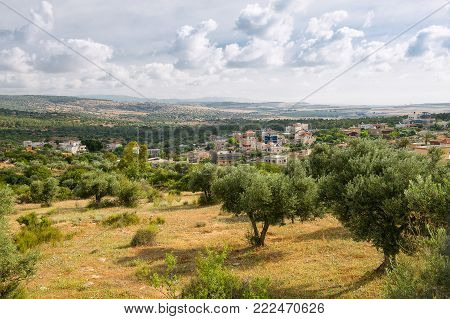 In the vicinity of mount Tabor cultivated magnificent gardens, olive, peach, ceresine, apples and pears...