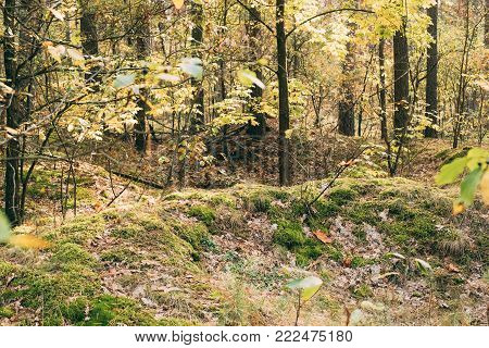 Old World War II Trenches In Forest Since Second World War In Belarus