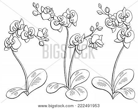Orchid flower graphic black white isolated sketch illustration set vector