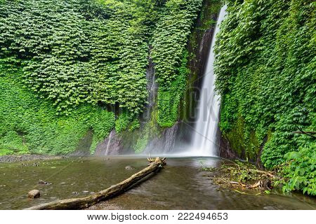 Munduk Waterfall (Buleleng) is a plunge waterfall in verdant rainforest surrounds. Green foliage surrounding beautiful waterfall.