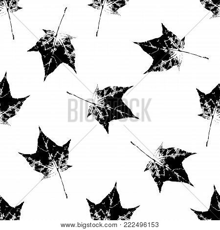 Black and white seamless pattern of falling maple leaves, hand made ink print, stamp, vector illustration. Hand printed grunge seamless pattern of black and white maple leaves