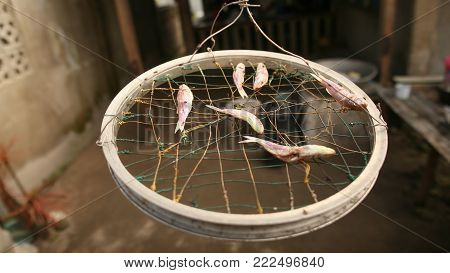 The fish are dried in the streets of the Filipino village