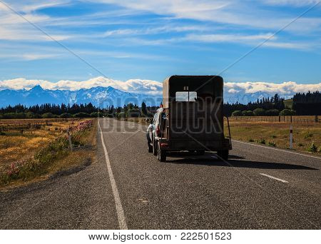 Pickup Car with cattle on trailer wagon travel on the road in Beautiful Nature, New Zealand natural landscape Scenic route in New Zealand.