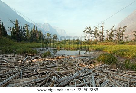 DEAD WOOD AT MARSH POND ON THE SHORES OF SAINT MARY LAKE AT WILD GOOSE ISLAND LOOKOUT POINT IN GLACIER NATIONAL PARK IN MONTANA USA