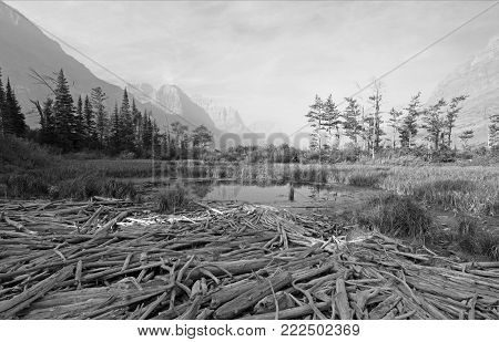 DEAD WOOD AT MARSH POND ON THE SHORES OF SAINT MARY LAKE AT WILD GOOSE ISLAND LOOKOUT POINT IN GLACIER NATIONAL PARK IN MONTANA U S A - BLACK AND WHITE