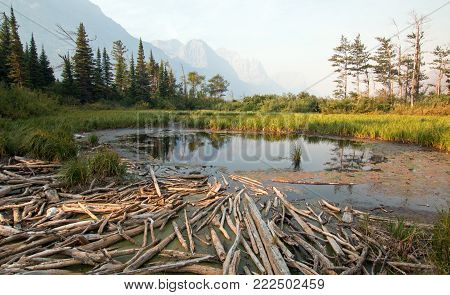DEAD WOOD AT MARSH POND ON THE SHORES OF SAINT MARY LAKE AT WILD GOOSE ISLAND LOOKOUT  IN GLACIER NATIONAL PARK IN MONTANA UNITED STATES