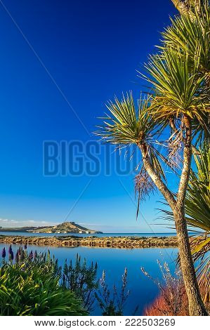 Cabbage tree growing above the beach on the souther island in New Zealand