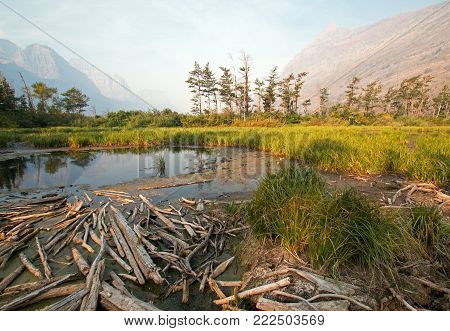 DEAD WOOD AT MARSH POND ON THE SHORES OF SAINT MARY LAKE AT WILD GOOSE ISLAND LOOKOUT POINT IN GLACIER NATIONAL PARK IN MONTANA UNITED STATES